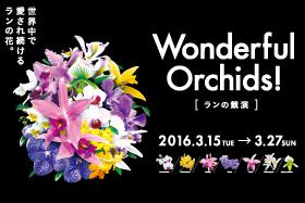 wonderful_orchids2016