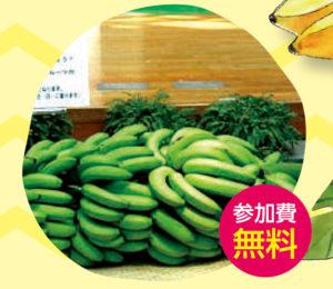 全房バナナ重量当てクイズ