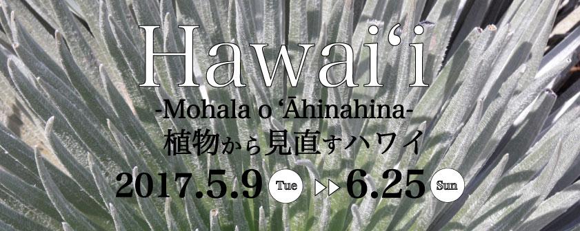 ハワイの植物展