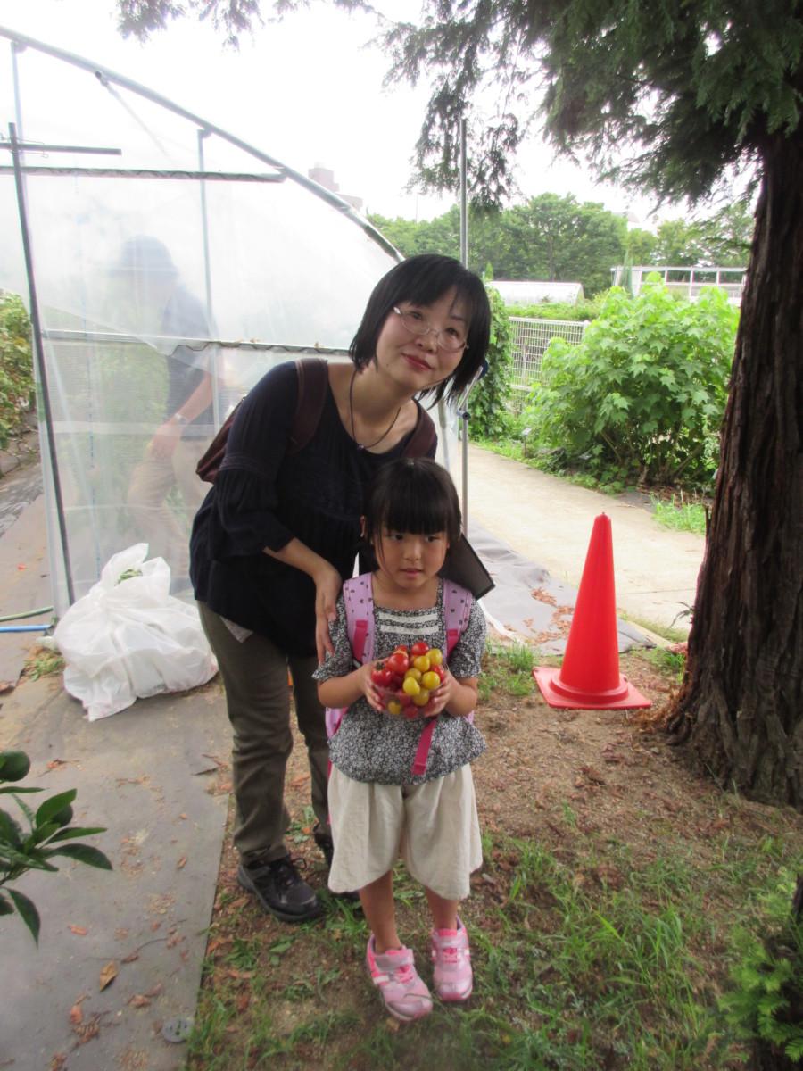 トマト収穫体験3