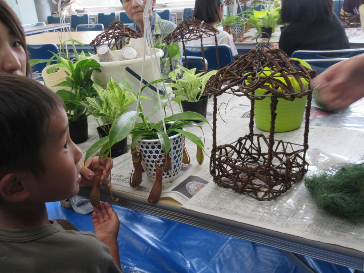 食虫植物寄せ植え2
