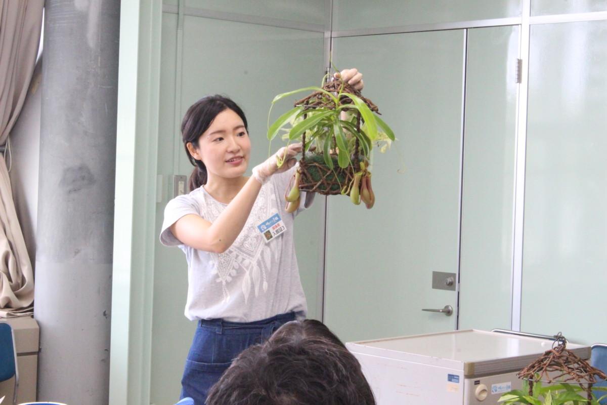 食虫植物寄せ植え1