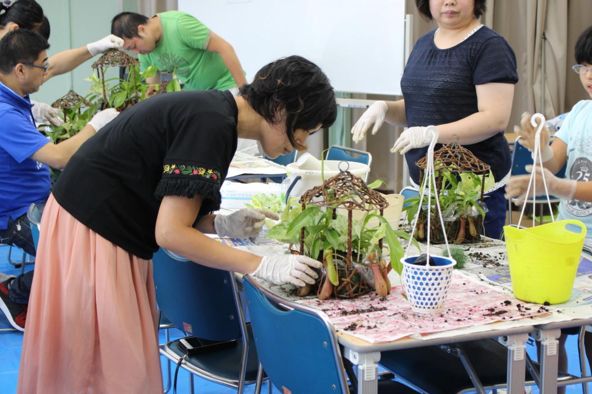 食虫植物寄せ植え6