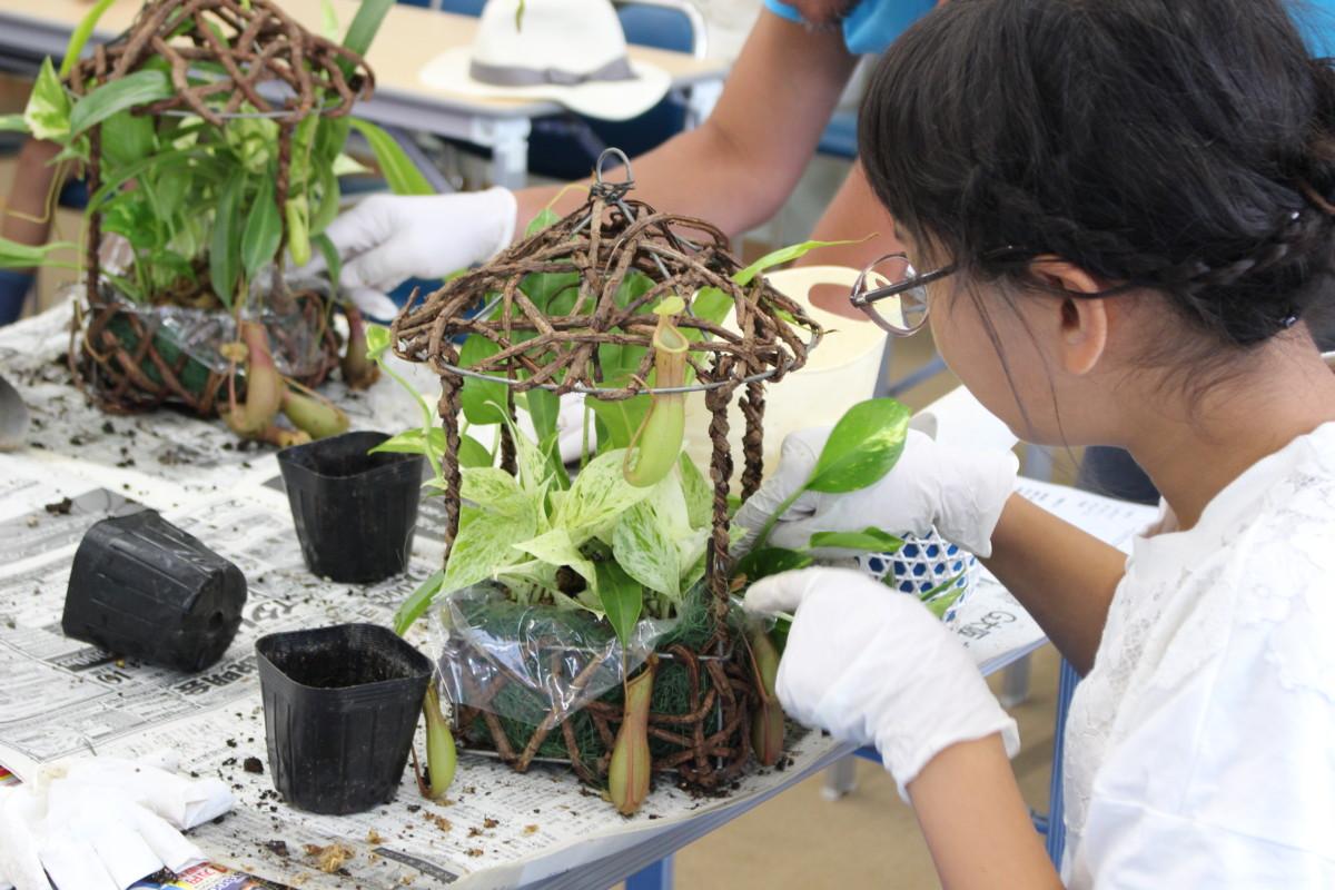 食虫植物寄せ植え3