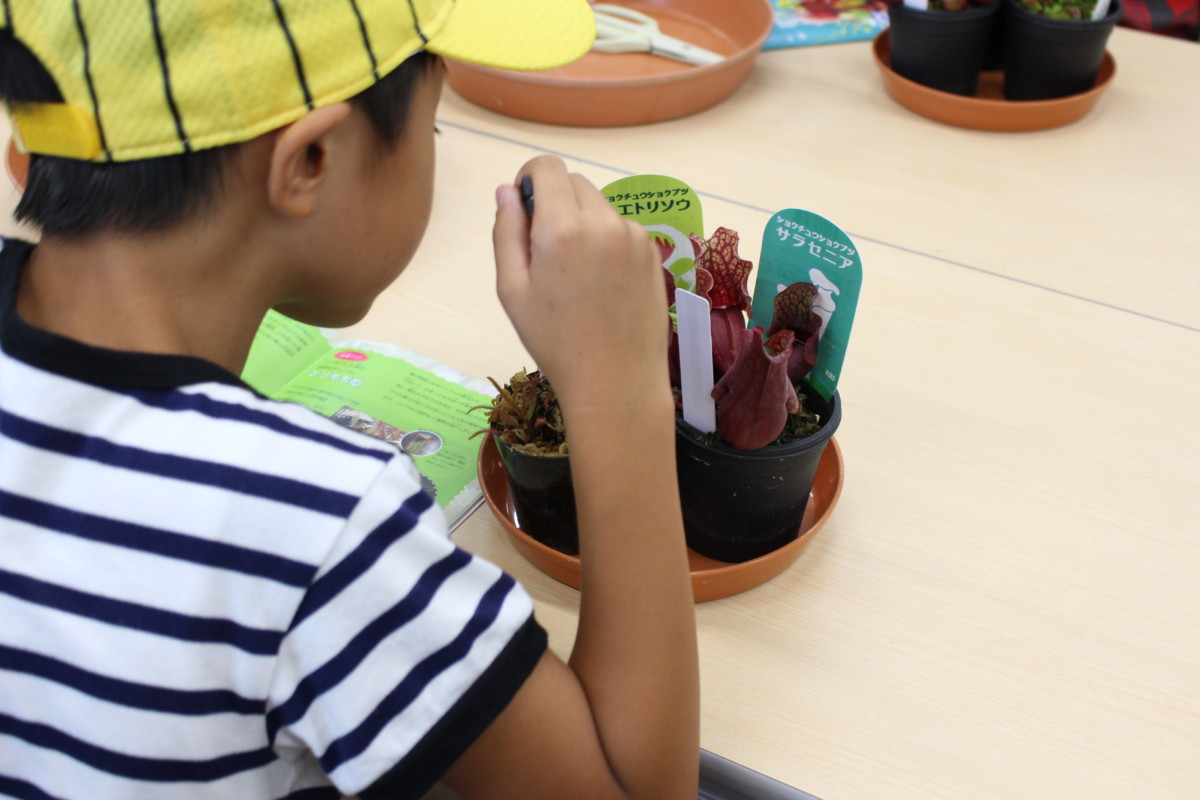 食虫植物観察教室3