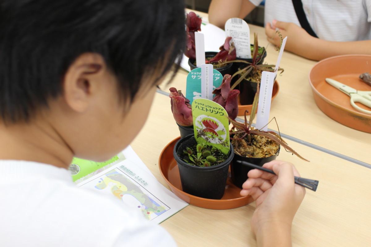食虫植物観察教室4