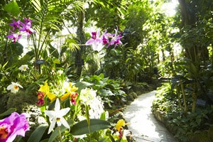 Humid Tropical Plant House