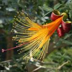 不思議の島マダガスカルの乾燥地植物