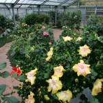 熱帯花木室