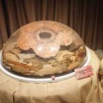 ラフレシアの標本がミニミュージアムに